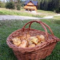 Agroturystyka u Danuty i Jerzego