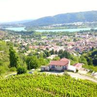 les vignes Ardéchoises - Peuplier