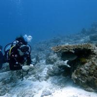 Rasdhoo Dive Lodge