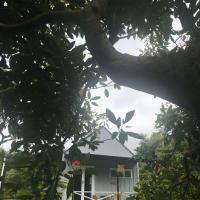 Paradise Grove