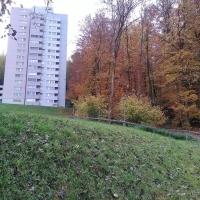 Forest View Apartment