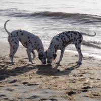 Residenz Lausitz - Apartments für Urlaub mit Hund