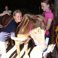 Pony-und Ferienhof Gut Habbecke