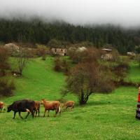 Homestay Süllü Dağ Evi