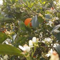 Naxos Garden