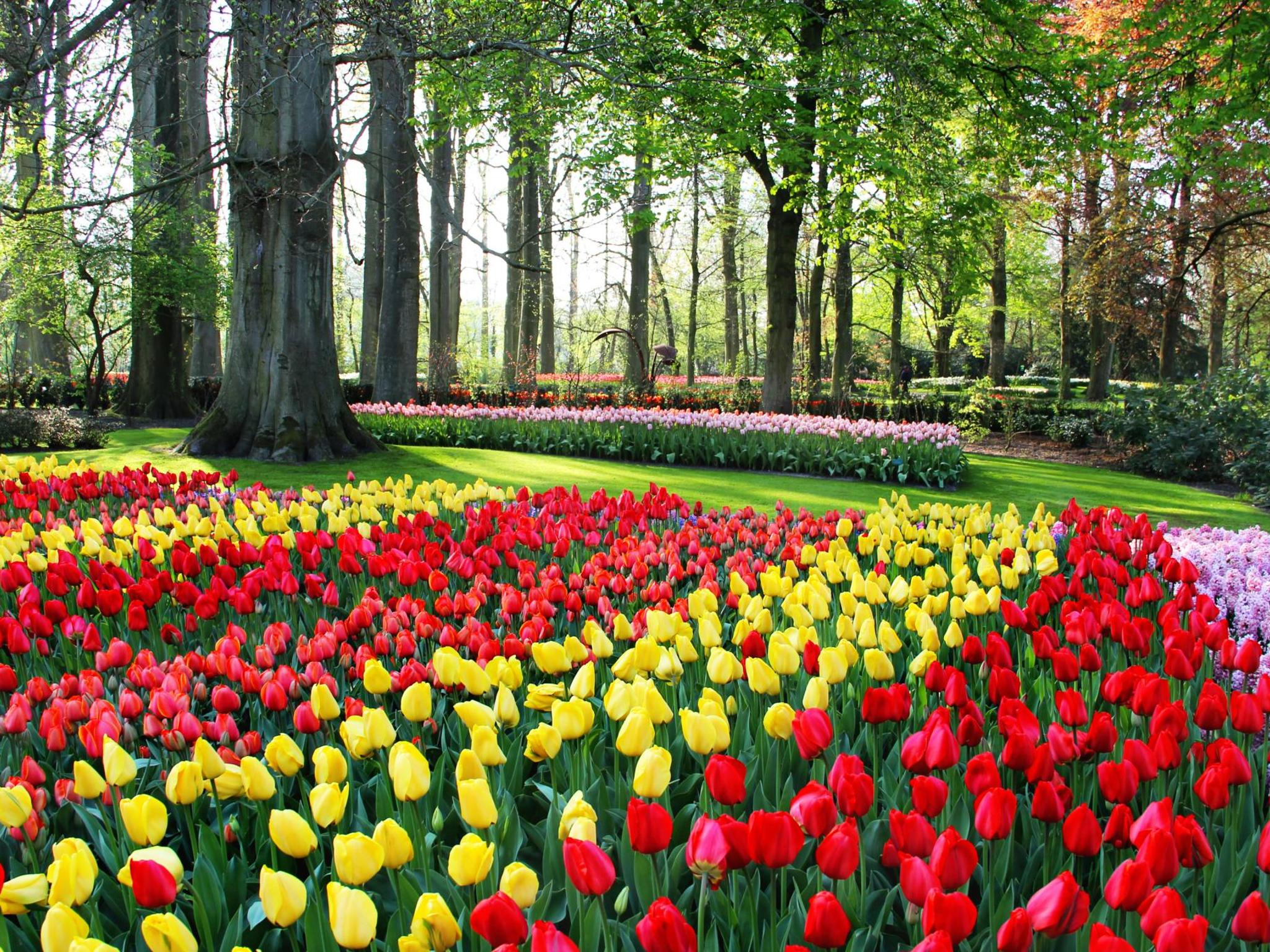 The Worlds Top 5 Destinations For Spring Flowers Booking