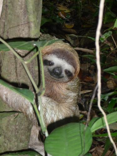 treehouse resident