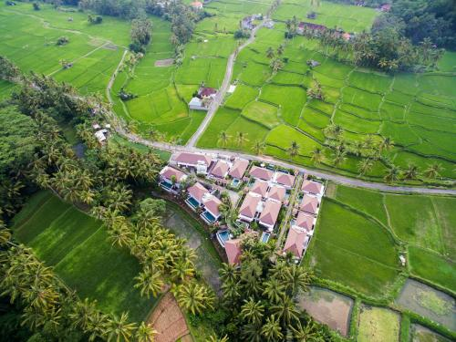 Dedary Kriyamaha